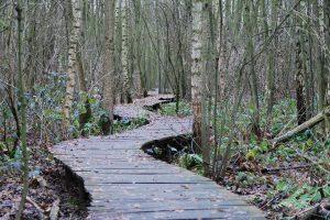 path-215325_1280