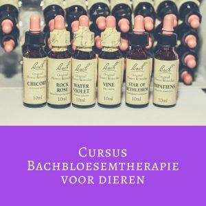 Cursus Bachbloesemtheraphie voor dieren